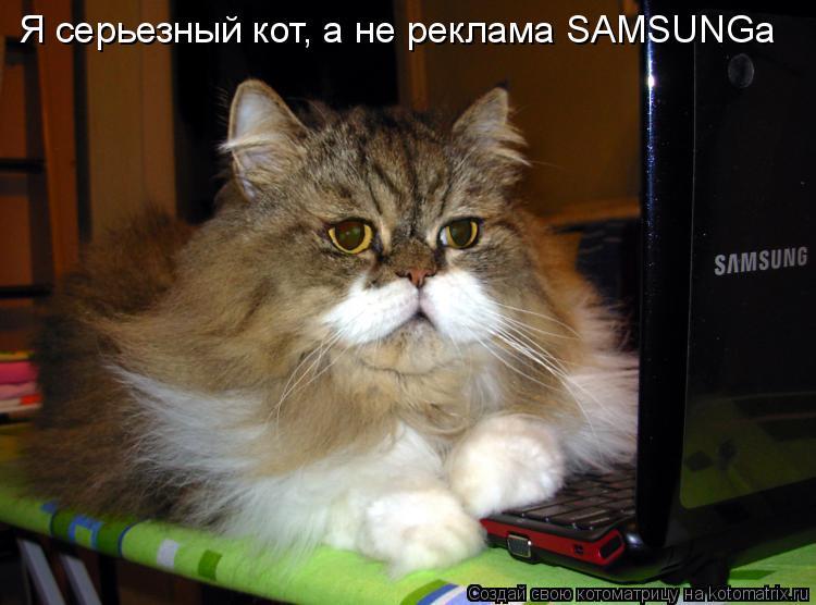 Котоматрица: Я серьезный кот, а не реклама SAMSUNGa