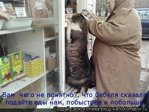 Котоматрица: Вам  чего не понятно?, что бабуля сказала подайте еды нам, побыстрее и побольше