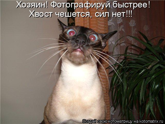 Котоматриця!)))) - Страница 4 742021