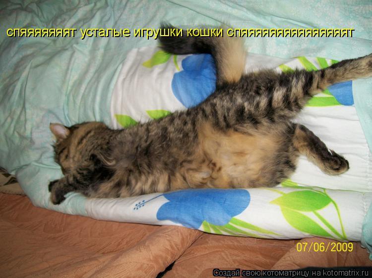 Котоматрица: спяяяяяяят усталые игрушки кошки спяяяяяяяяяяяяяяят