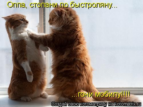 Котоматрица: Оппа, стопани по быстроляну... ...гони мобилу!!!!