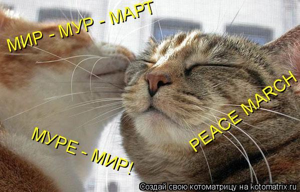 Котоматрица: МИР - МУР - МАРТ МУРЕ - МИР! PEACE MARCH