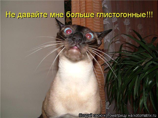 Котоматрица: Не давайте мне больше глистогонные!!!