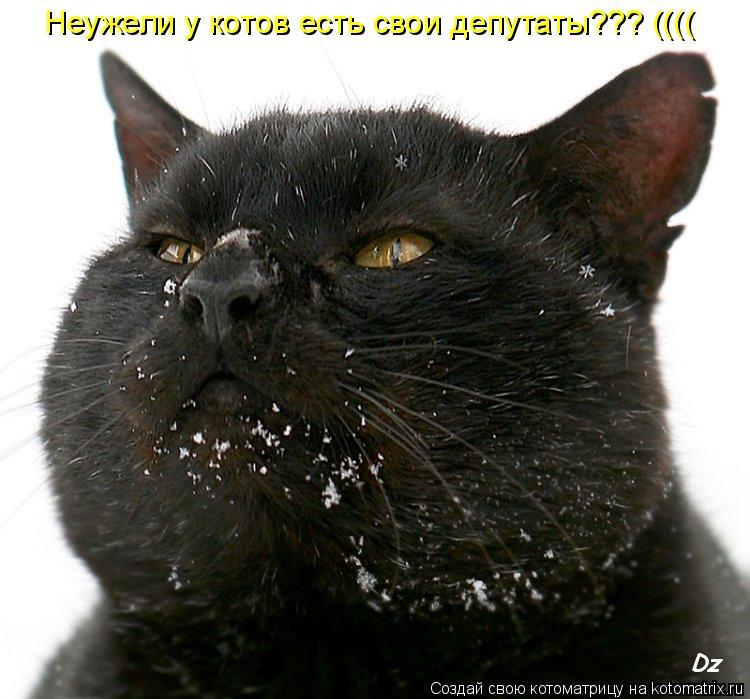 Котоматрица: Неужели у котов есть свои депутаты??? ((((
