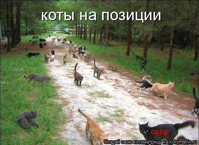 Котоматрица: коты на позиции ссср . . .