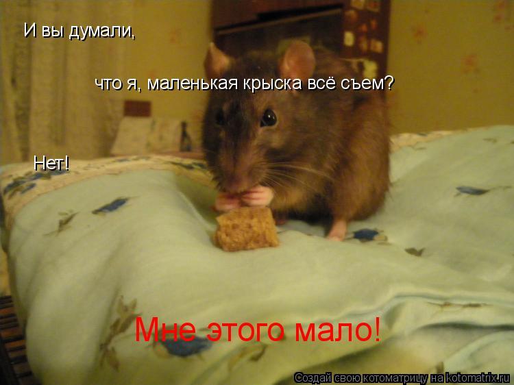Котоматрица: Мне этого мало! И вы думали, что я, маленькая крыска всё съем? Нет!