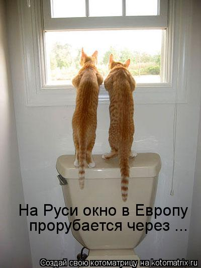 Котоматрица: прорубается через ... На Руси окно в Европу