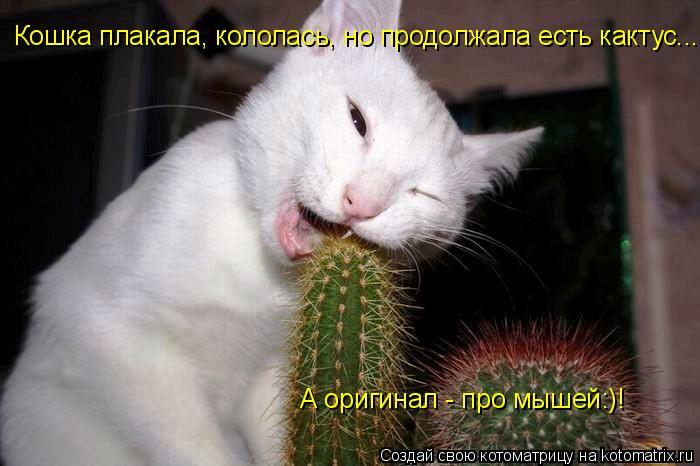 Котоматрица: Кошка плакала, кололась, но продолжала есть кактус... А оригинал - про мышей:)!