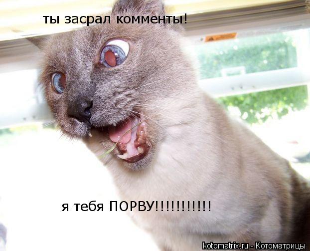 Котоматрица: ты засрал комменты! я тебя ПОРВУ!!!!!!!!!!!