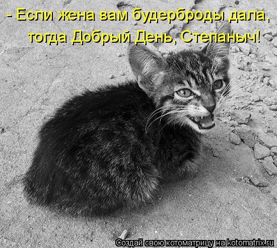 Котоматрица: - Если жена вам будерброды дала, тогда Добрый День, Степаныч!