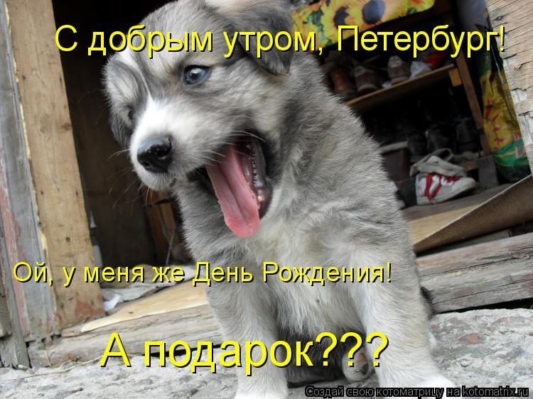 Котоматрица: С добрым утром, Петербург! А подарок??? Ой, у меня же День Рождения!