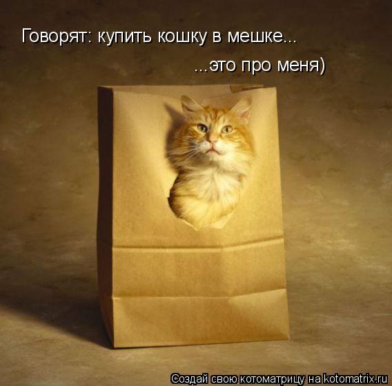 Котоматрица: Говорят: купить кошку в мешке... ...это про меня)
