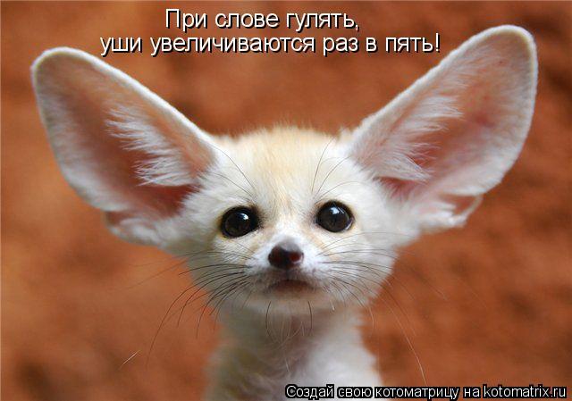 Котоматрица: При слове гулять, уши увеличиваются раз в пять!
