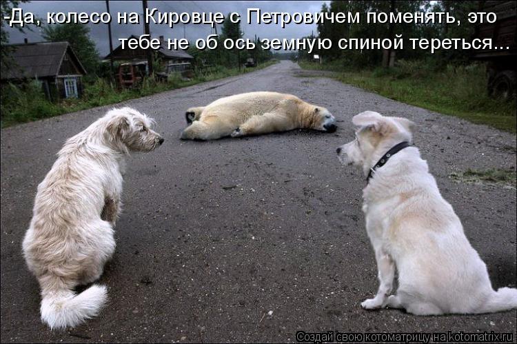 Котоматрица: -Да, колесо на Кировце с Петровичем поменять, это  тебе не об ось земную спиной тереться...
