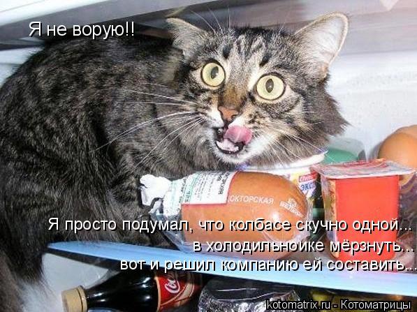 Котоматрица: Я не ворую!! Я просто подумал, что колбасе скучно одной...  в холодильноике мёрзнуть...  вот и решил компанию ей составить...