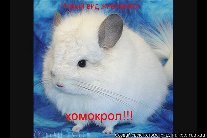 Котоматрица: Новый вид животного- хомокрол!!!