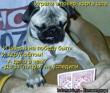 """Котоматрица: Играли в покер, карта шла... И шансы на победу были... И вдруг облом! А дело в чем? - Да за """"лицом"""" не уследили..."""