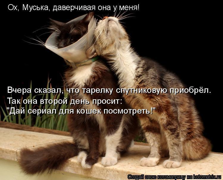 """Котоматрица: Ох, Муська, даверчивая она у меня! Вчера сказал, что тарелку спутниковую приобрёл. Так она второй день просит: """"Дай сериал для кошек посмотре"""