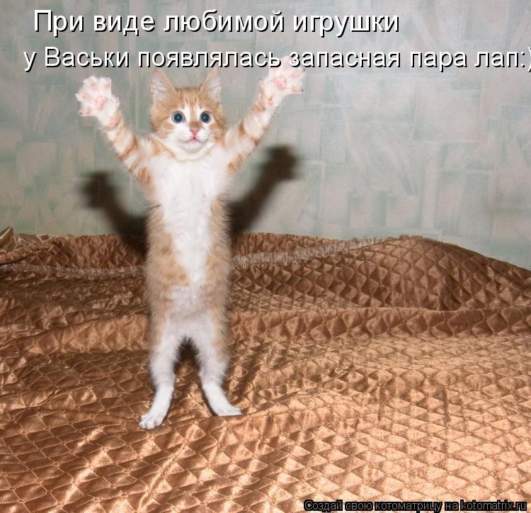 Котоматрица: При виде любимой игрушки у Васьки появлялась запасная пара лап:)