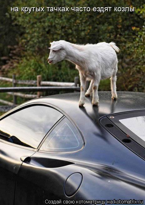 Котоматрица: на крутых тачках часто ездят козлы