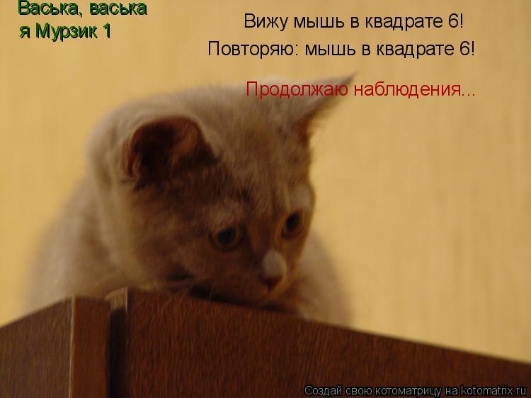 Котоматрица: Вижу мышь в квадрате 6! Васька, васька  я Мурзик 1 Продолжаю наблюдения... Повторяю: мышь в квадрате 6!