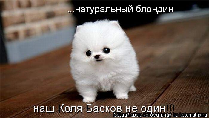 Котоматрица: ...натуральный блондин наш Коля Басков не один!!!