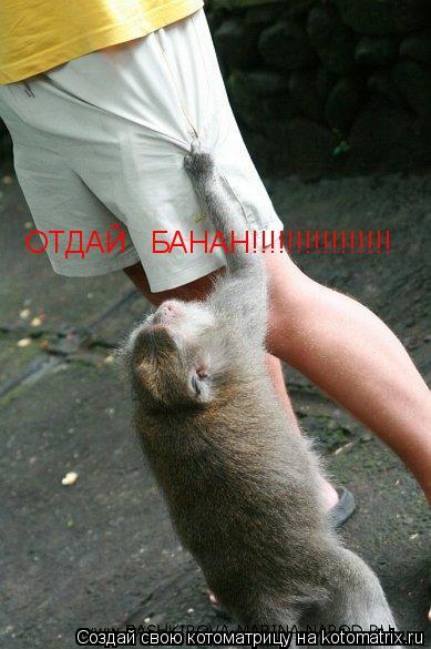 Котоматрица: ОТДАЙ   БАНАН!!!!!!!!!!!!!!!!