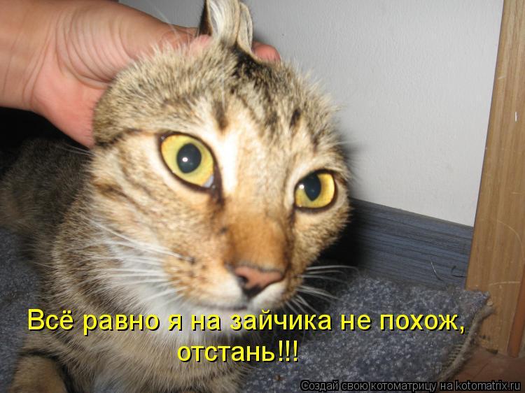 Котоматрица: Всё равно я на зайчика не похож, отстань!!!