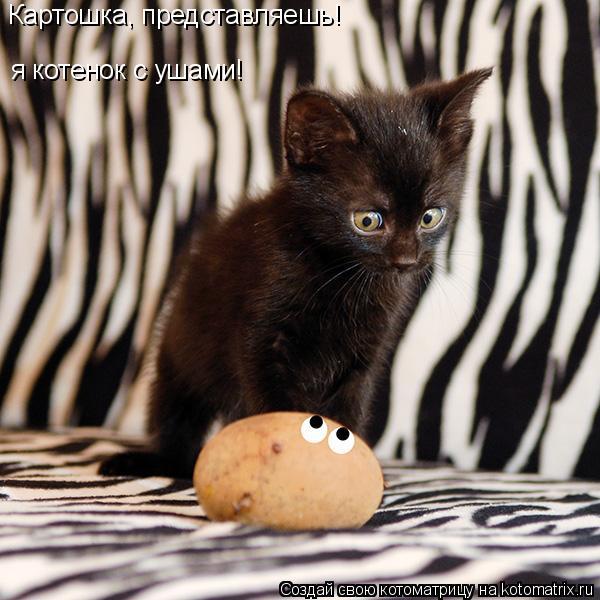 Котоматрица: я котенок с ушами! Картошка, представляешь!