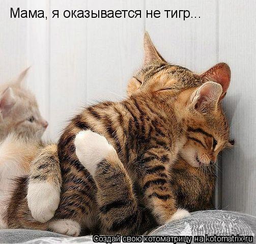 Котоматрица: Мама, я оказывается не тигр...