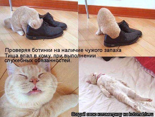 Котоматрица: Проверяя ботинки на наличие чужого запаха Тиша впал в кому, при выполнении  служебных обязанностей.