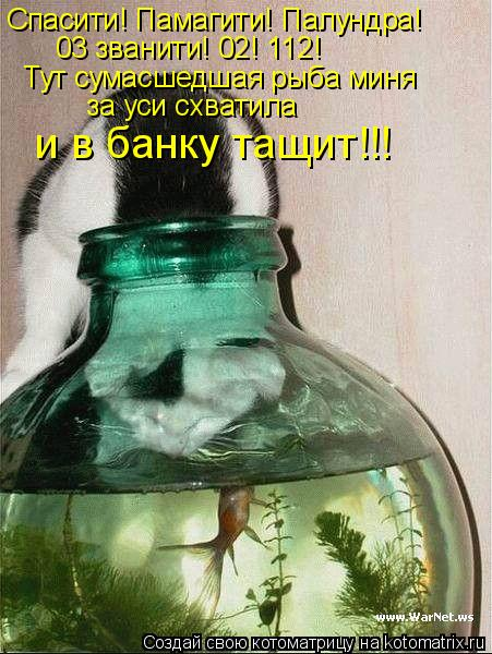 Котоматрица: Спасити! Памагити! Палундра! 03 званити! 02! 112! Тут сумасшедшая рыба миня  за уси схватила и в банку тащит!!!