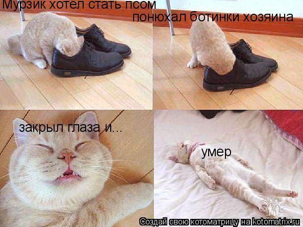 Котоматрица: Мурзик хотел стать псом понюхал ботинки хозяина закрыл глаза и... умер