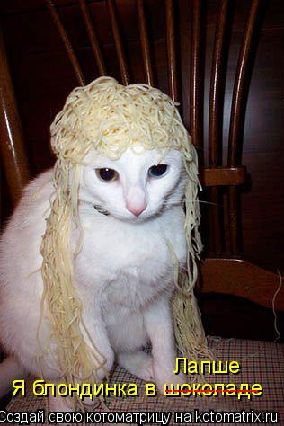 Котоматрица: Я блондинка в шоколаде Я блондинка в шоколаде ------------- Лапше