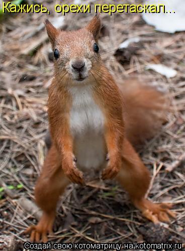 Котоматрица: Кажись, орехи перетаскал...