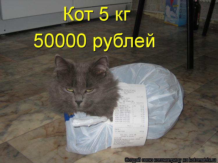 Котоматрица: Кот 5 кг 50000 рублей