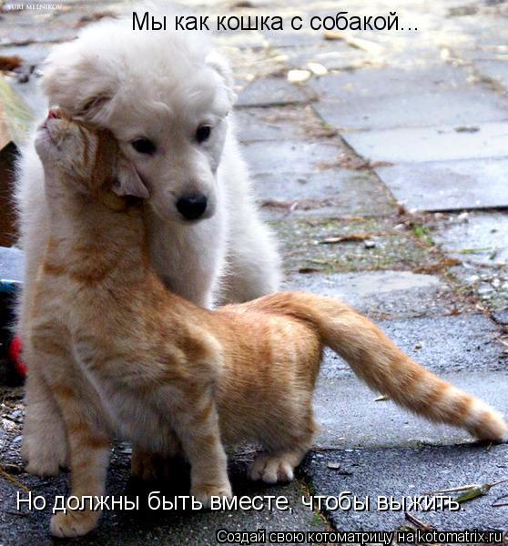 Котоматрица: Мы как кошка с собакой... Но должны быть вместе, чтобы выжить.