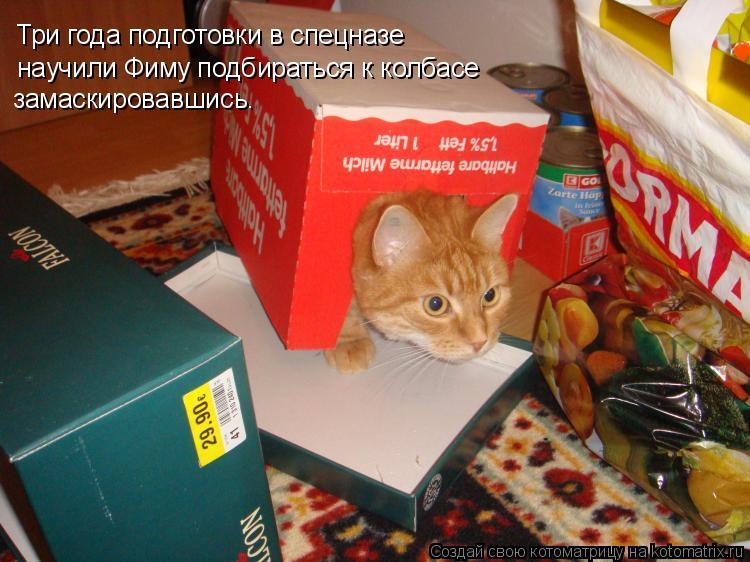 Котоматрица: Три года подготовки в спецназе научили Фиму подбираться к колбасе замаскировавшись.