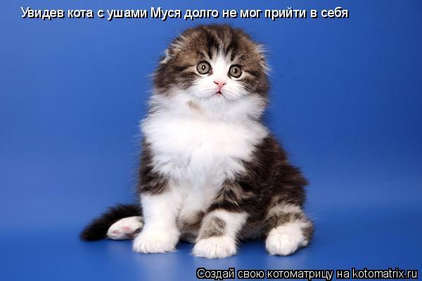 Котоматрица: Увидев кота с ушами Муся долго не мог прийти в себя