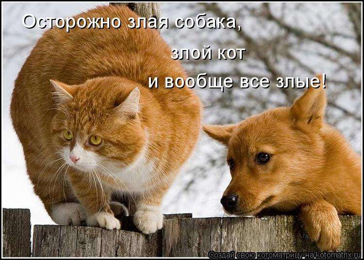 Котоматрица: Осторожно злая собака, злой кот и вообще все злые!