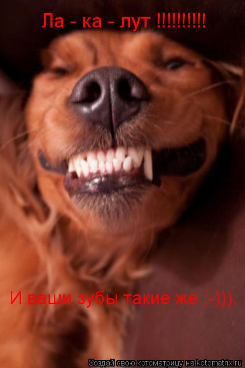 Котоматрица: Ла - ка - лут !!!!!!!!!! И ваши зубы такие же ;-))).