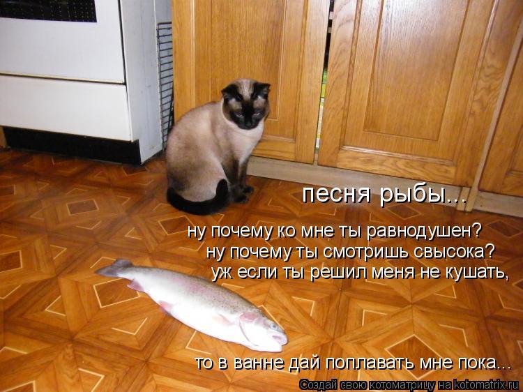 Котоматрица: песня рыбы... ну почему ко мне ты равнодушен? ну почему ты смотришь свысока? уж если ты решил меня не кушать, то в ванне дай поплавать мне пока.