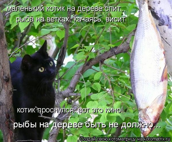 Котоматрица: маленький котик на дереве спит... рыба на ветках, качаясь, висит котик проснулся..вот это кино! рыбы на дереве быть не должно...