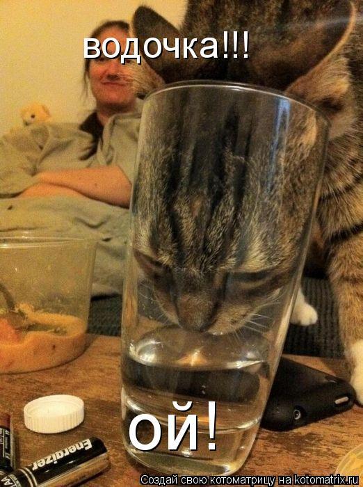 Котоматрица: водочка!!! ой!