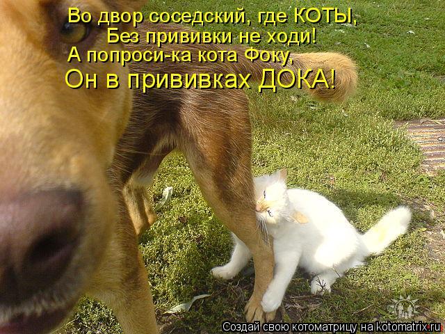 Котоматрица: Во двор соседский, где КОТЫ, Без прививки не ходи! А попроси-ка кота Фоку, Он в прививках ДОКА!