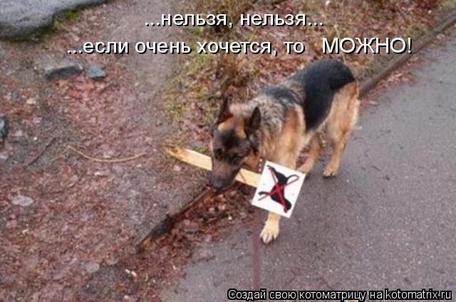 Котоматрица: ...нельзя, нельзя... ...если очень хочется, то   МОЖНО!