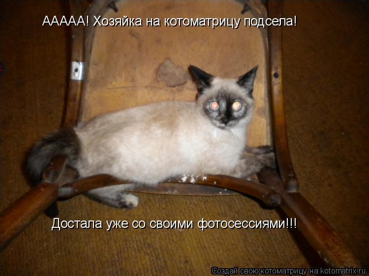 Котоматрица: ААААА! Хозяйка на котоматрицу подсела! Достала уже со своими фотосессиями!!!
