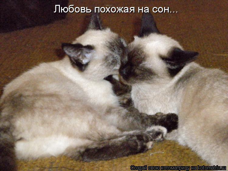 Котоматрица: Любовь похожая на сон...