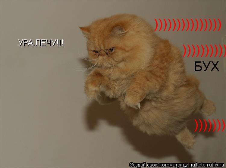 Котоматрица: УРА,ЛЕЧУ!!! БУХ ))))))))))))))) ))))))))))))))) )))))))))))))))
