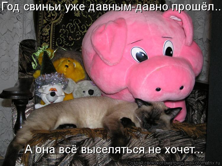 Котоматрица: Год свиньи уже давным-давно прошёл... А она всё выселяться не хочет...